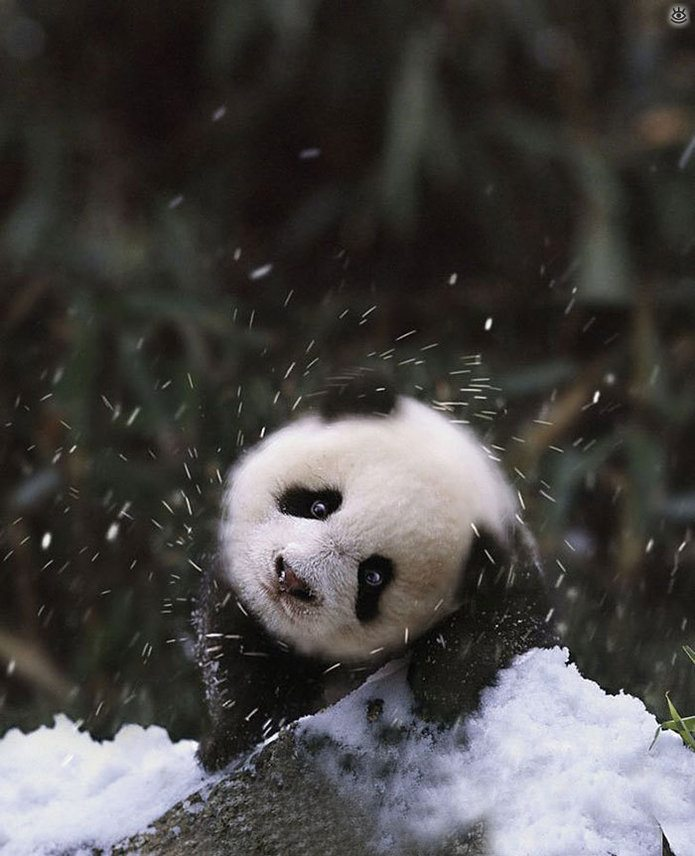Animal-reactions-to-the-first-snow-9