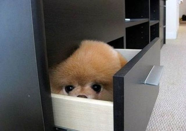 Dogs-who-are-trying-to-find-a-private-place-1
