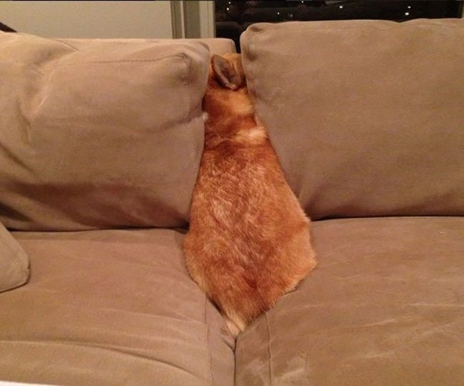 Dogs-who-are-trying-to-find-a-private-place-11