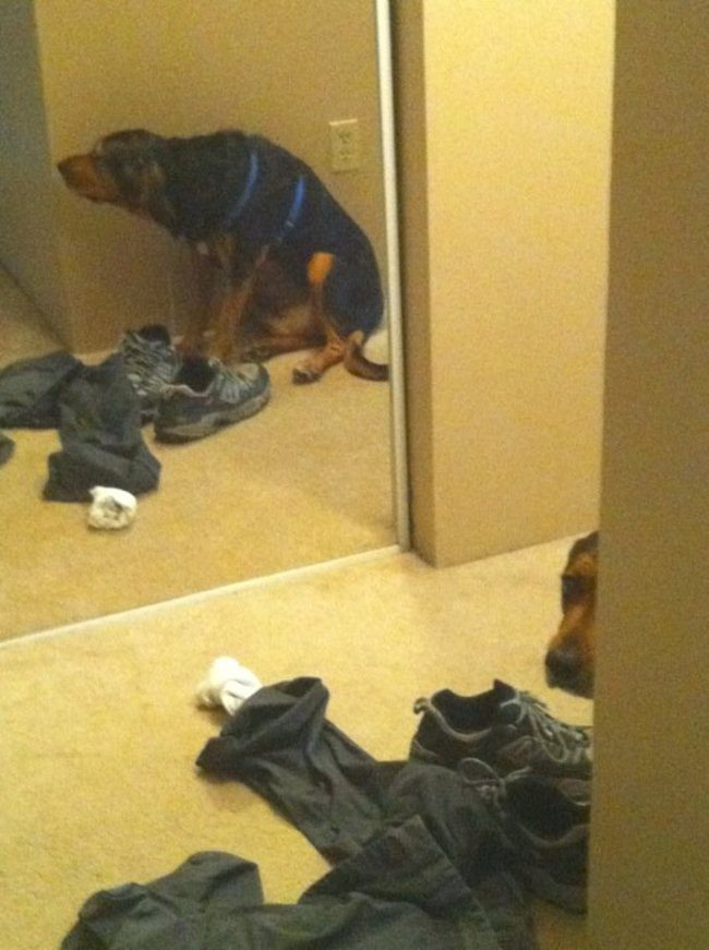 Dogs-who-are-trying-to-find-a-private-place-16