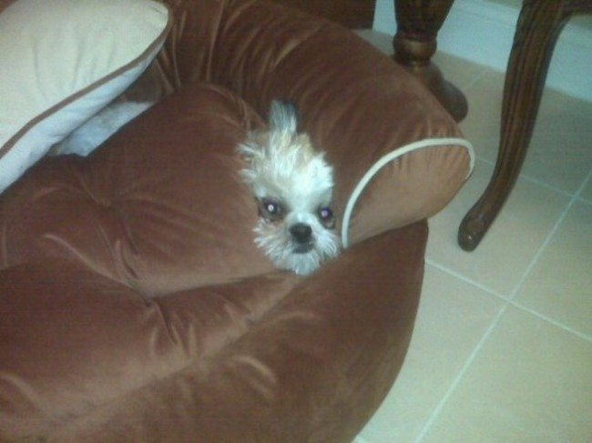 Dogs-who-are-trying-to-find-a-private-place-17