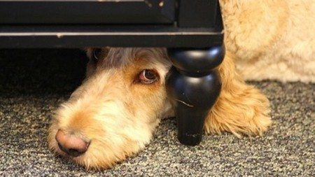 Dogs-who-are-trying-to-find-a-private-place-18