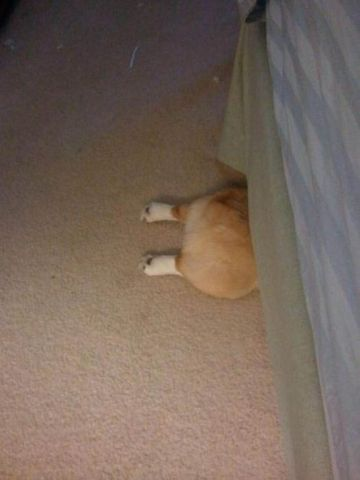 Dogs-who-are-trying-to-find-a-private-place-6