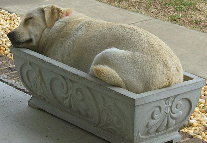 Dogs-that-are-comfortable-to-sleep-in-the-most-unimaginable-poses-16