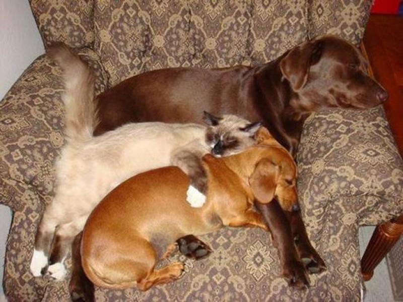 Dogs-that-are-comfortable-to-sleep-in-the-most-unimaginable-poses-17