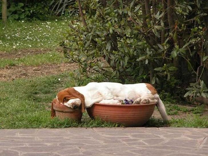 Dogs-that-are-comfortable-to-sleep-in-the-most-unimaginable-poses-18