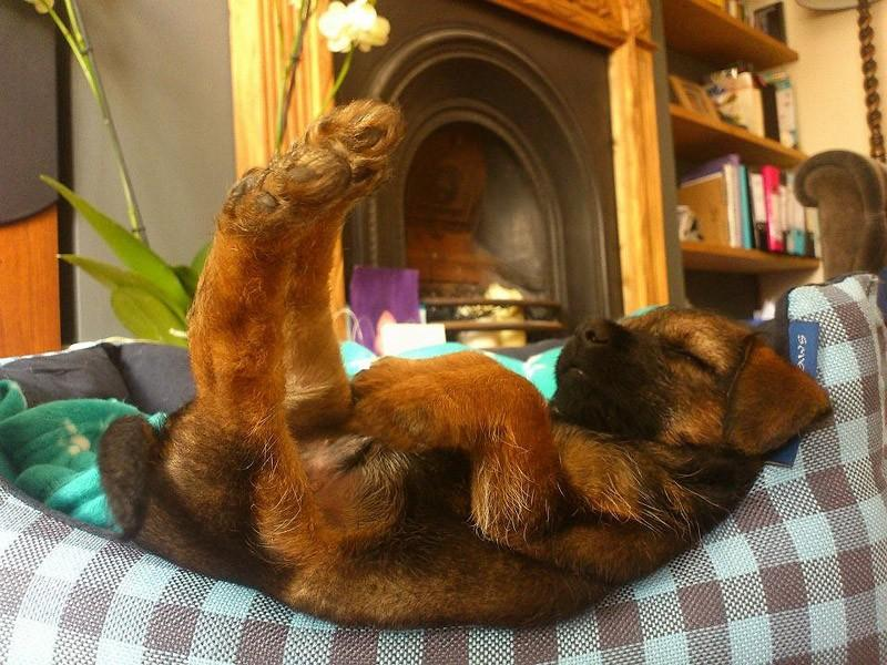 Dogs-that-are-comfortable-to-sleep-in-the-most-unimaginable-poses-21