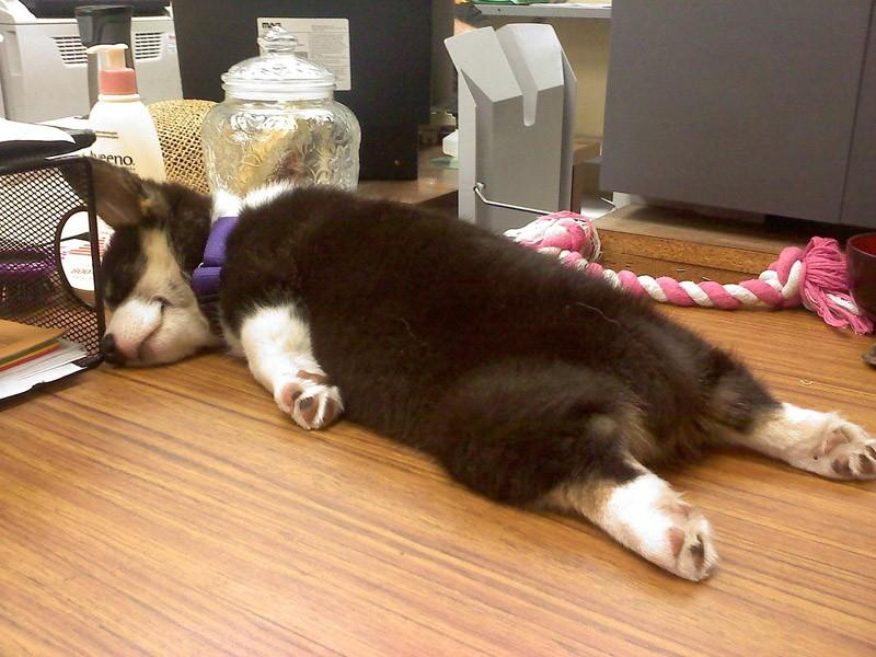 Dogs-that-are-comfortable-to-sleep-in-the-most-unimaginable-poses-25