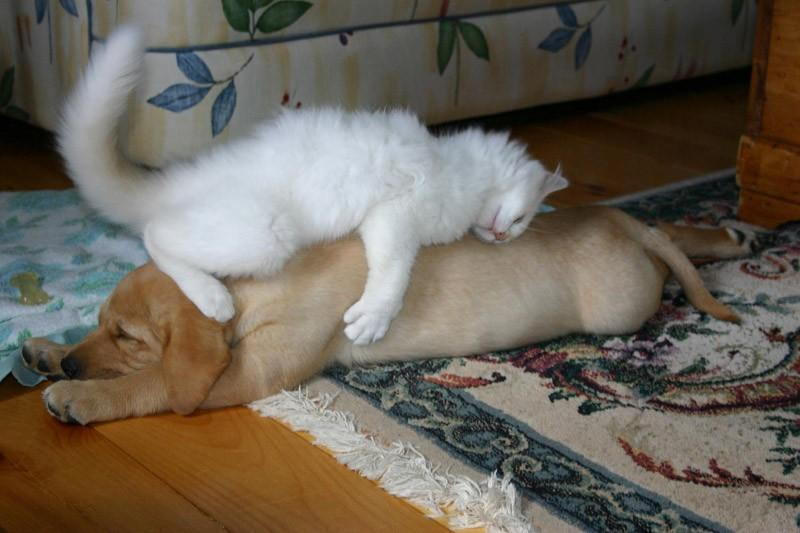 Dogs-that-are-comfortable-to-sleep-in-the-most-unimaginable-poses-26