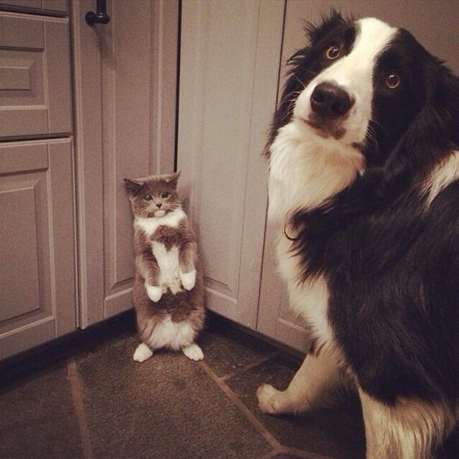 Expression-misbehaving-pets-1