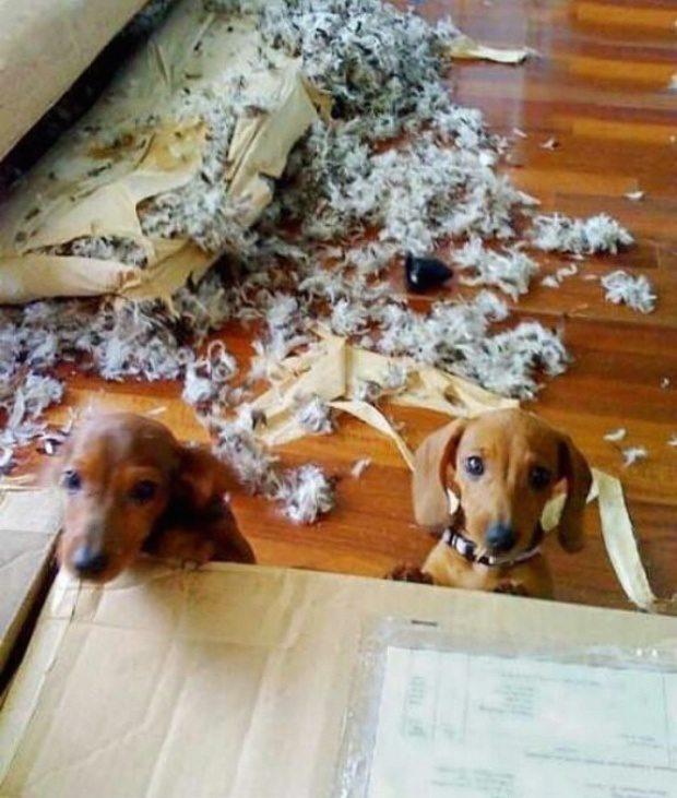 Expression-misbehaving-pets-14