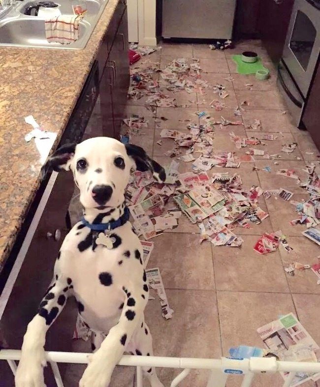 Expression-misbehaving-pets-20