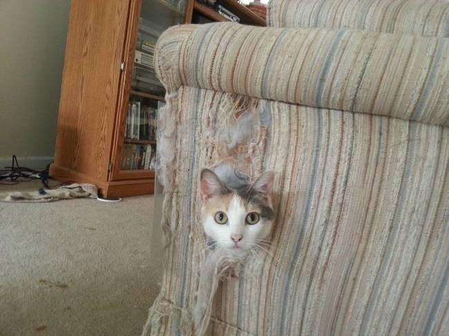 Expression-misbehaving-pets-21
