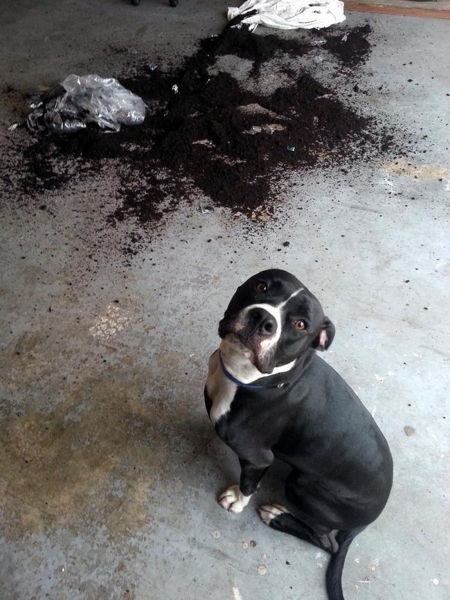 Expression-misbehaving-pets-22