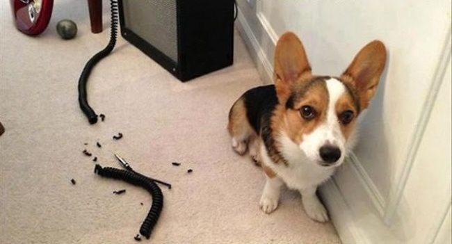 Expression-misbehaving-pets-3