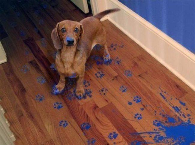 Expression-misbehaving-pets-6