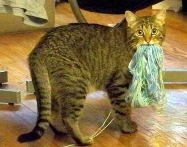 Expression-misbehaving-pets-8