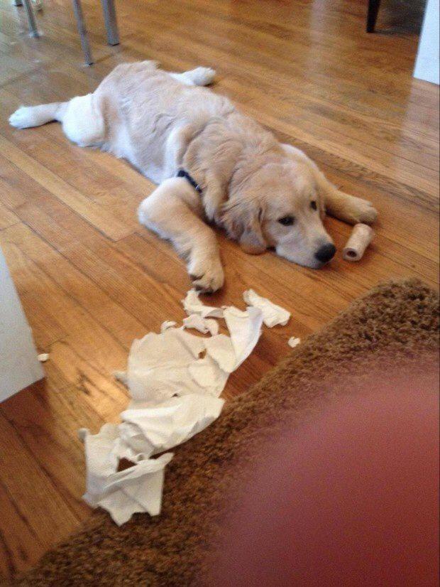 Expression-misbehaving-pets-9