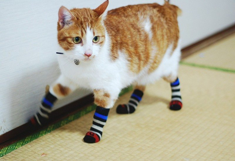 Use-cat-in-your-household-13