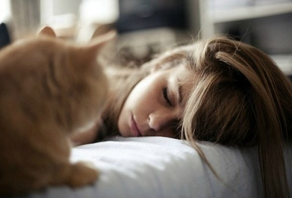 Use-cat-in-your-household-21