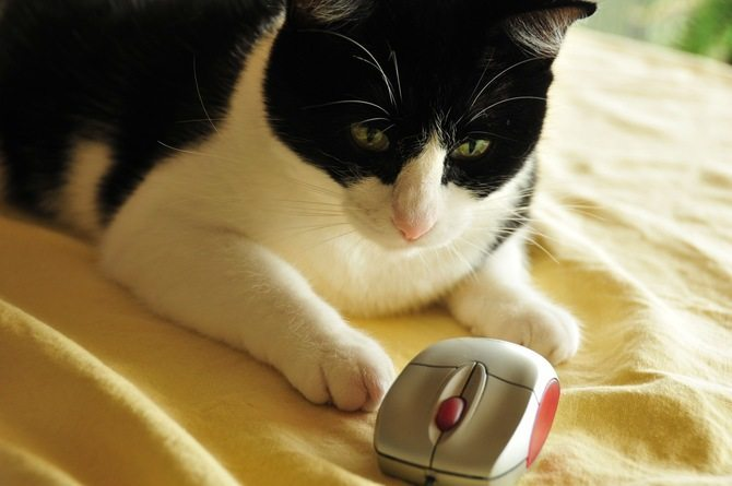 Use-cat-in-your-household-26