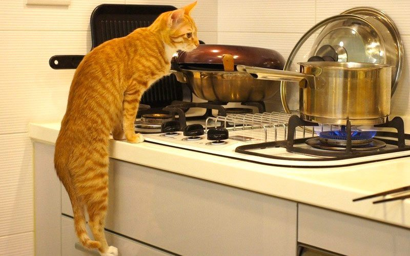 Use-cat-in-your-household-7