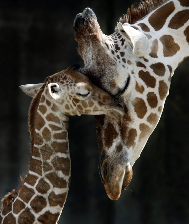 Similarities-between-parents-and-lids-in-the-animal-kingdom-2