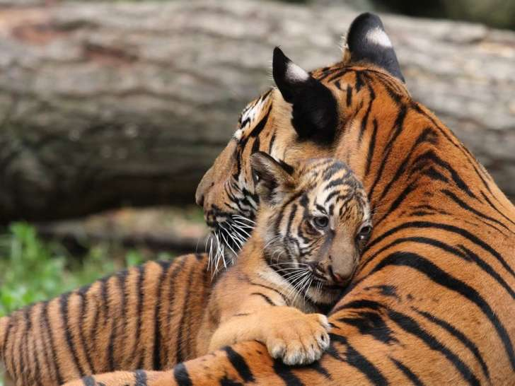Similarities-between-parents-and-lids-in-the-animal-kingdom-22