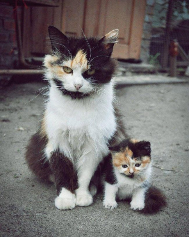 Similarities-between-parents-and-lids-in-the-animal-kingdom-3