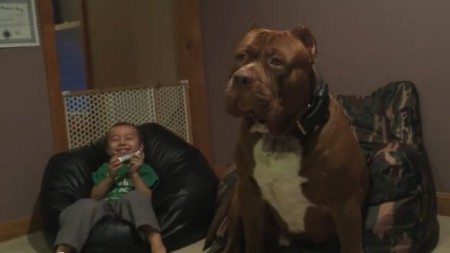 The-world's-largest-pit-bull-sing
