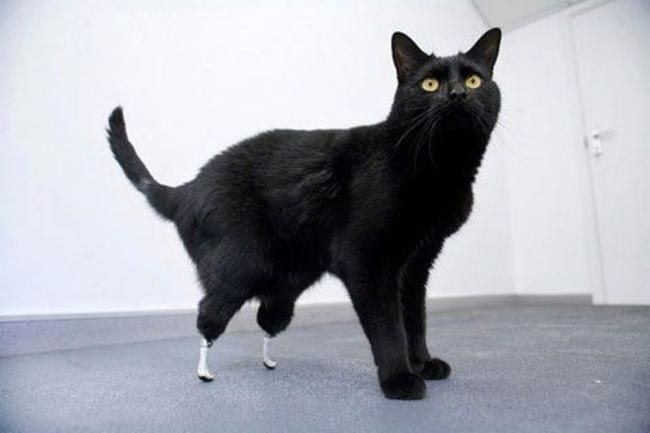 Animals-that-got-a-chance-for-a-new-life-thanks-to-the-prosthesis-1