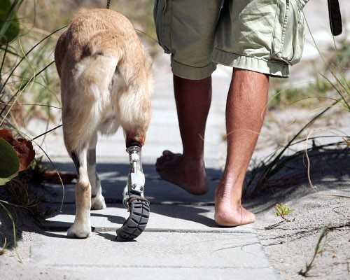 Animals-that-got-a-chance-for-a-new-life-thanks-to-the-prosthesis-17