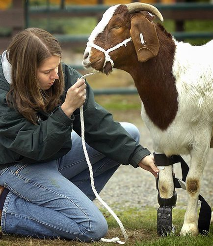 Animals-that-got-a-chance-for-a-new-life-thanks-to-the-prosthesis-19