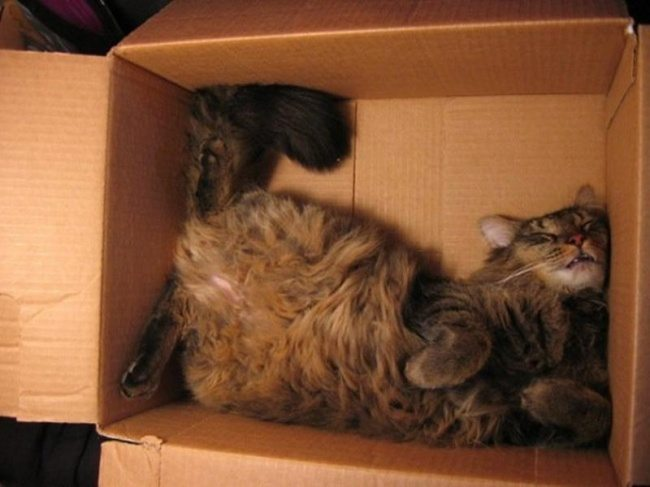 Cats-that-know-how-to-choose-proper-sleep-position-1