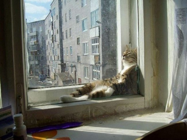 Cats-that-know-how-to-choose-proper-sleep-position-10