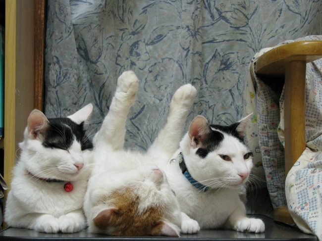 Cats-that-know-how-to-choose-proper-sleep-position-15