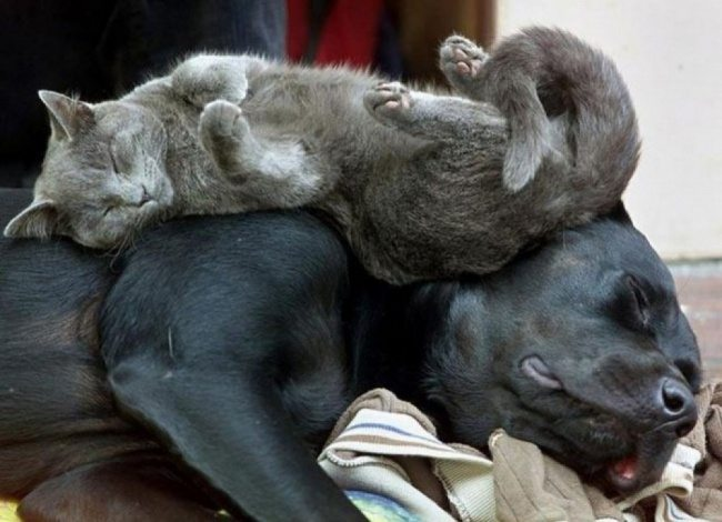 Cats-that-know-how-to-choose-proper-sleep-position-16