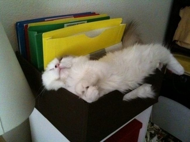 Cats-that-know-how-to-choose-proper-sleep-position-19