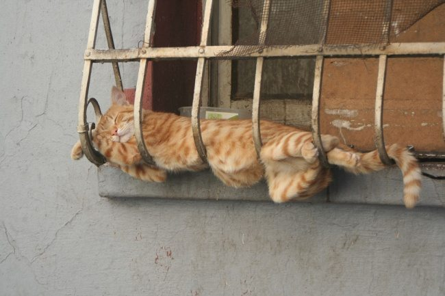 Cats-that-know-how-to-choose-proper-sleep-position-22