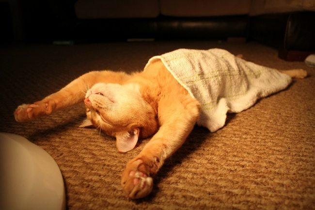 Cats-that-know-how-to-choose-proper-sleep-position-23