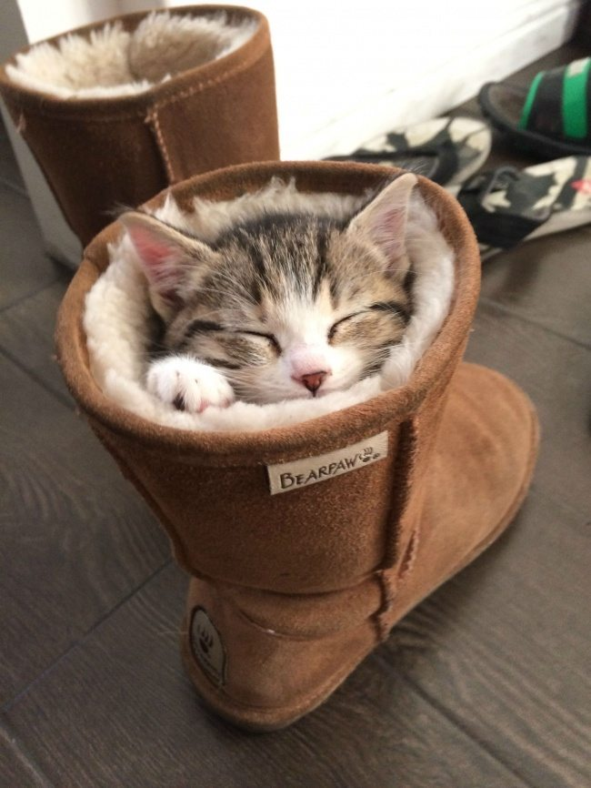 Cats-that-know-how-to-choose-proper-sleep-position-24