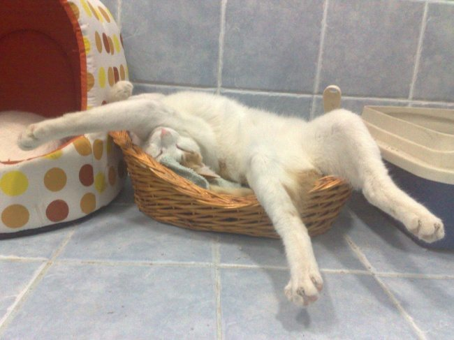 Cats-that-know-how-to-choose-proper-sleep-position-25