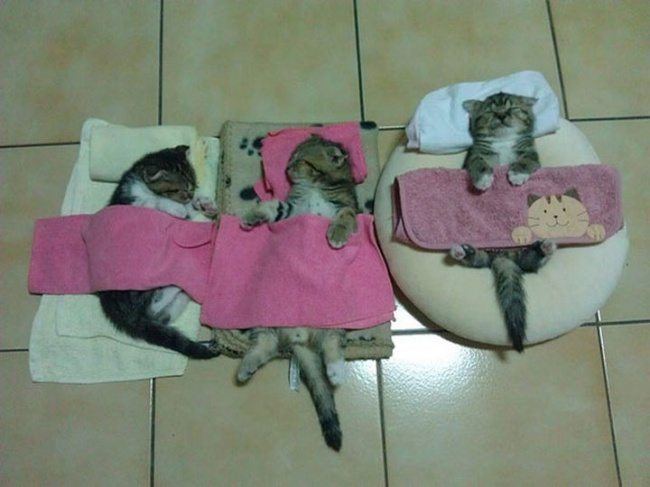 Cats-that-know-how-to-choose-proper-sleep-position-26