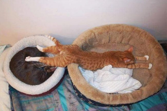 Cats-that-know-how-to-choose-proper-sleep-position-28