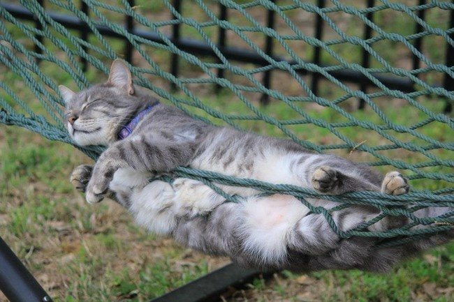 Cats-that-know-how-to-choose-proper-sleep-position-4