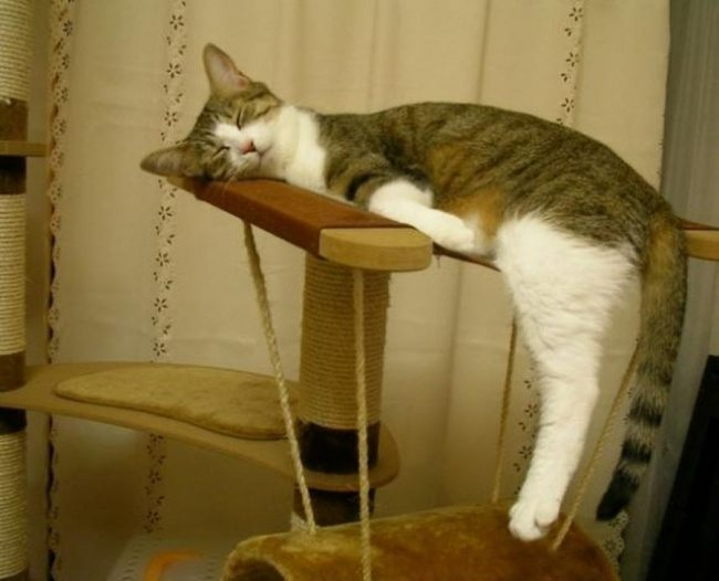 Cats-that-know-how-to-choose-proper-sleep-position-7