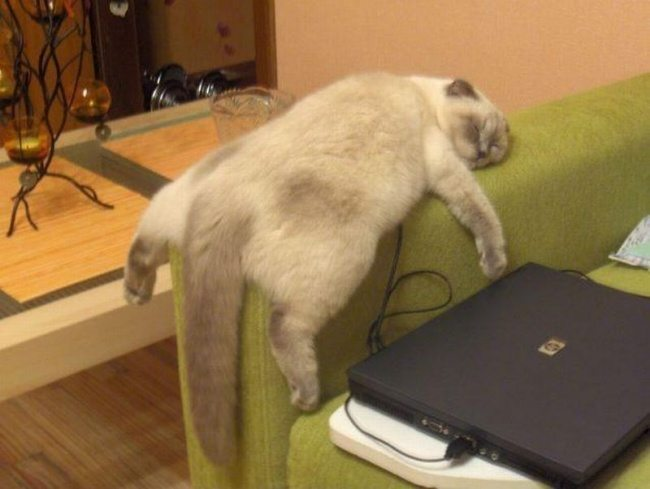 Cats-that-know-how-to-choose-proper-sleep-position-9