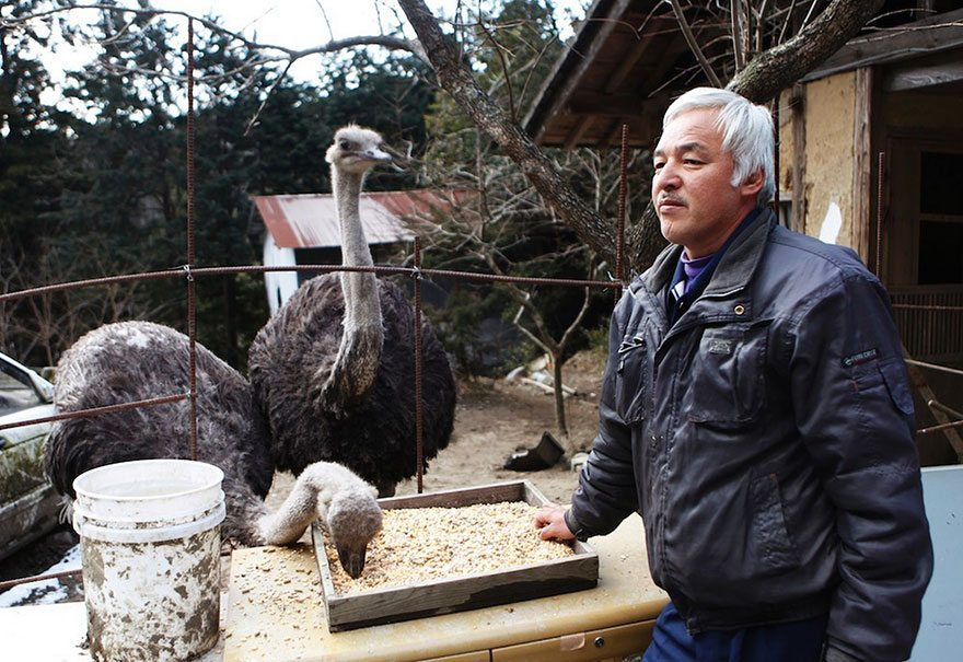 Man-risks-his-life-to-save-animals-left-in-Fukushima-12