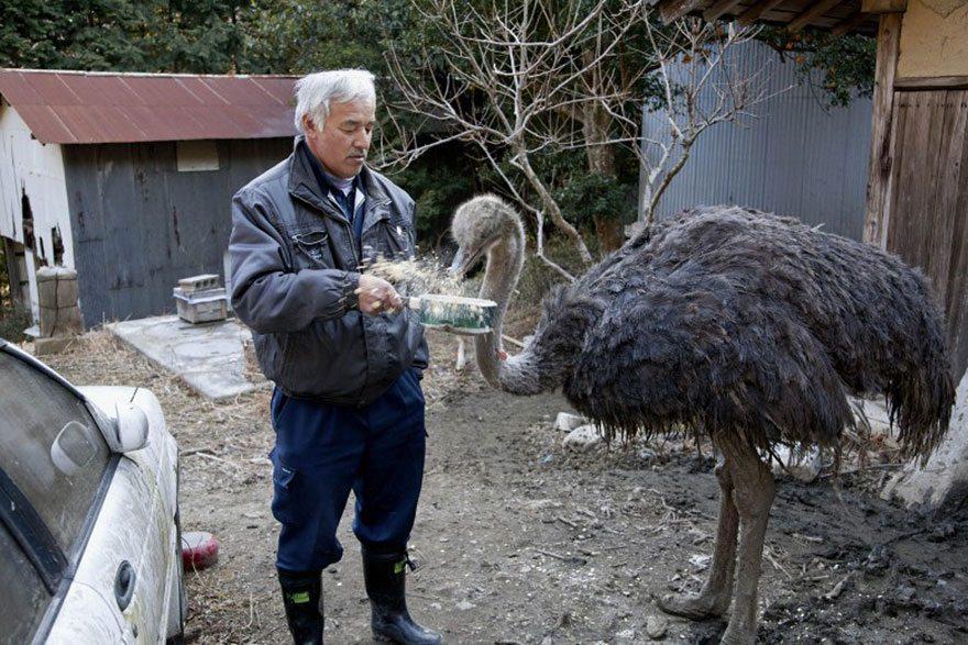 Man-risks-his-life-to-save-animals-left-in-Fukushima-15