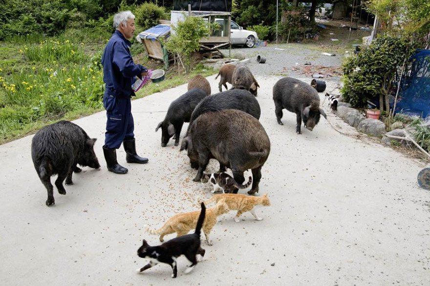 Man-risks-his-life-to-save-animals-left-in-Fukushima-2